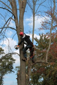 tree_trimmers